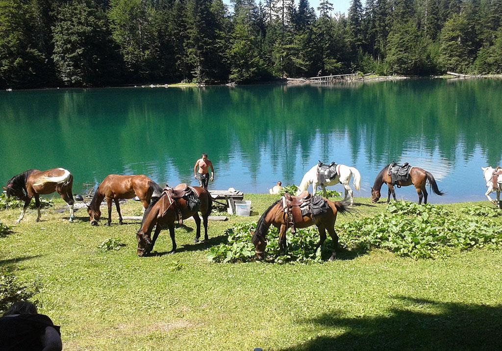 Horse Riding / School